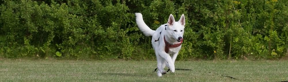 Hundekompagniet